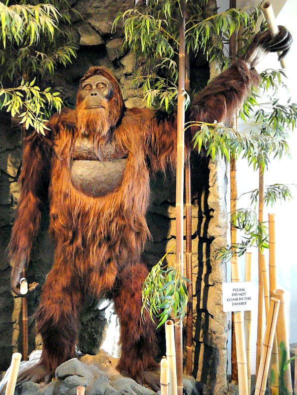 Modelo de Gigantopithecus del Museo del Hombre de San Diego, Estados Unidos. (Public Domain)