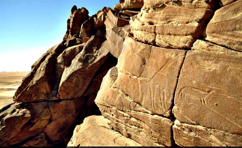 Grabados del desierto occidental de Egipto en los que pueden observarse imágenes de jirafas y otros animales. (Fotografía: La Gran Época/TARA)