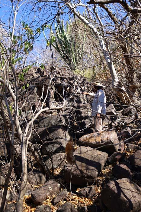 Esta gran estructura colapsada en las ruinas de Huaxtla muestra partes de un muro megalítico construido con grandes bloques de piedra de basalto. (Marco Vigato)