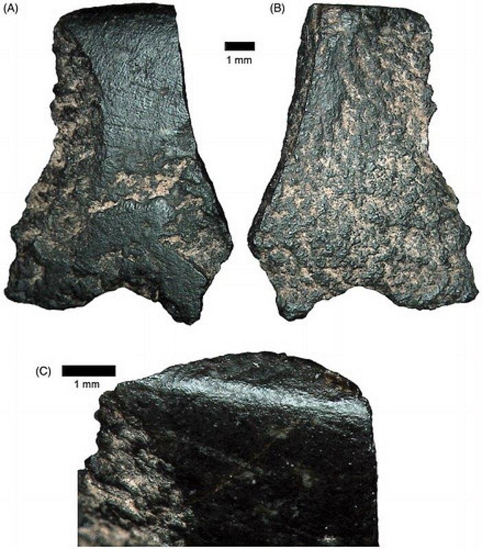 Fotografía de los fragmentos recuperados pertenecientes al hacha más antigua del mundo. (A) Cara dorsal. (B) Cara ventral. (C) Primer plano del bisel en la zona de intersección entre ambas caras. (Fotografía: Australian Archaeology/ tandfonline /ANU)