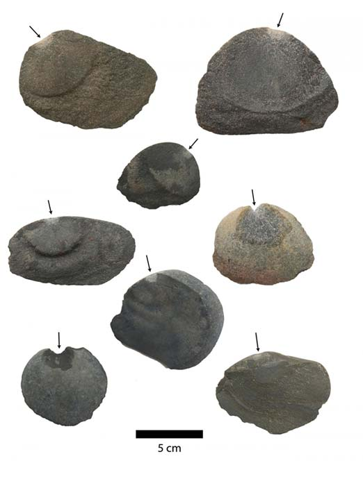 Los raspadores y herramientas para cortar estaban hechos de piedra y solo una de sus caras era funcional. (Fotografía: Tom Dillehay)