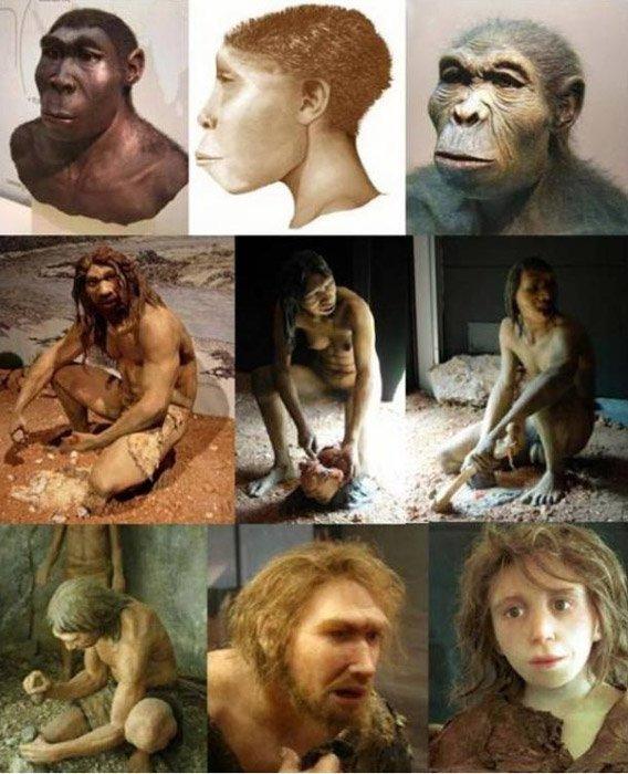 Representaciones de diversos homínidos (género Homo); (de derecha a izquierda) H. habilis, H. ergaster, H. erectus; H. antecessor - macho, hembra, H. heidelbergensis; H. neanderthalensis - niña, adulto, H. sapiens sapiens. Dominio público