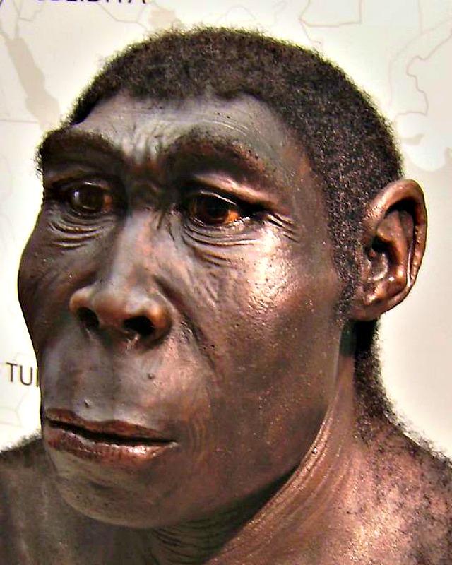 Reconstrucción de un ejemplar de Homo erectus expuesta en el Museo del Estado de Westfalia, Herne, Alemania. (klimaundmensch.de/CC BY-SA 2.5)