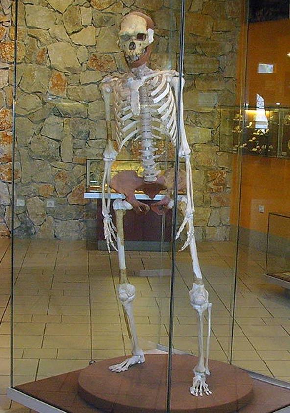 Homo erectus de Tautavel, Francia (reconstrucción, Museo Tautavel). (CC BY SA 3.0)