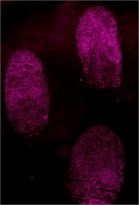 Huellas dactilares a las que se ha aplicado Azul Egipcio micronizado. Imagen: Ben Errington, aportada por el autor.