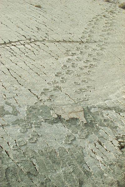 Huellas de dinosaurios (concretamente titanosaurios). (CC BY-SA 3.0)