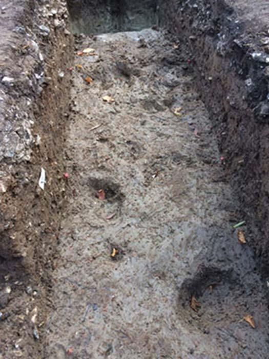 En Blick Mead hay huellas de bóvidos salvajes (uros) perfectamente conservadas. (Universidad de Buckingham)