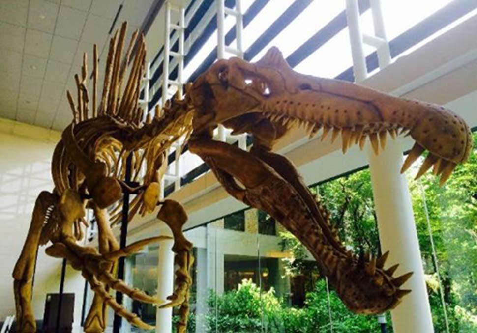 Los huesos de dinosaurio eran utilizados antiguamente como medicamentos 'mágicos'. (Legendz Collective)