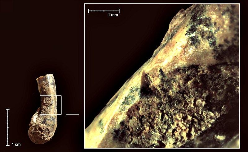 Marcas de cortes en uno de los húmeros de tortuga recuperados en la Cueva de Qesem. (SCI-NEWS/Ruth Blasco)