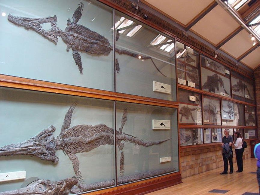 Ictiosaurios del Museo de Historia Natural de Londres. La presencia de visitantes ayuda a hacerse una idea de la escala y los diferentes tamaños, grandes y pequeños, de estas bestias. (Drow male/CC BY-SA)