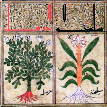 Illustrations-from-Arab-manuscript.jpg