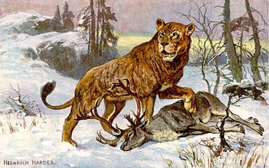 """Esta pintura de un león de las cavernas (Panthera leo spelaea) fue realizada para ilustrar una tarjeta de una colección de treinta titulada """"Tiere der Urwelt"""" (Animales del Mundo Prehistórico). De la serie III. El león de la ilustración se está alimentando de un reno. (Dominio público)"""