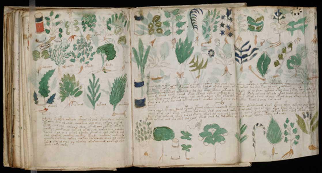 Páginas del manuscrito Voynich en las que aparecen diversas ilustraciones de plantas (Public Domain)