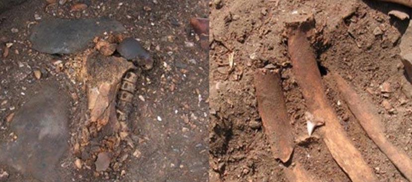 Izquierda: Fémur de león marino y vértebras de tiburón azul. Derecha: Diente de tiburón hallado en una tumba (Prieto, 2010)