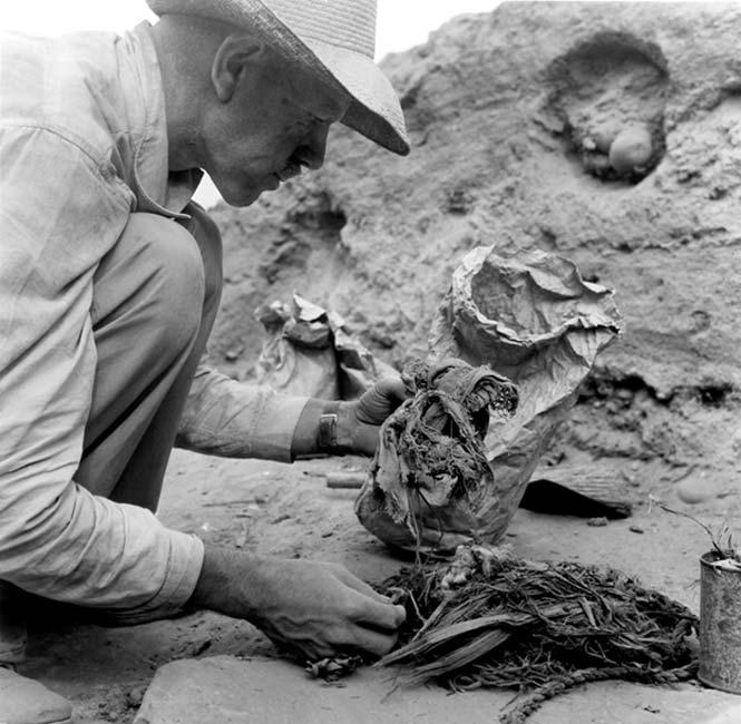 Junius Bird examina elementos textiles, botánicos y de cordaje hallados en Huaca Prieta, 1946-1947. Fotografía de John Collier. (Museo Americano de Historia Natural)