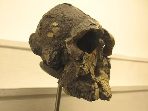 Kenyanthropus-platyops.jpg