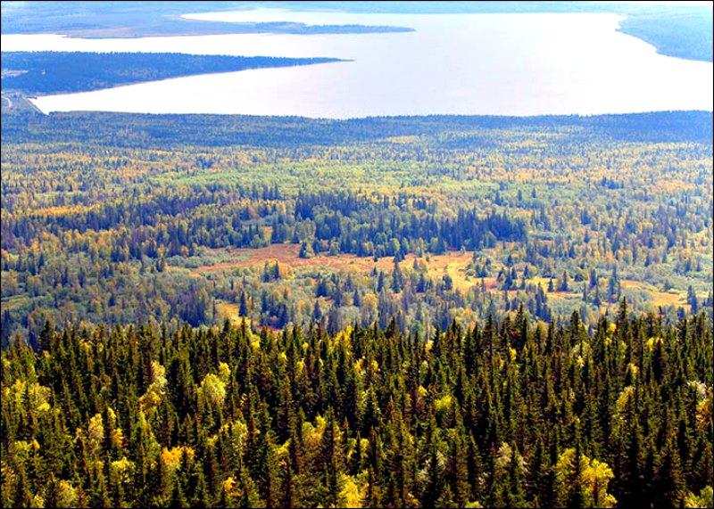 El gigantesco alce fue descubierto cerca del lago Zyuratkul, en los montes Urales, Rusia. (Fotografía: Stanislav Grigoryev/ The Siberian Times)