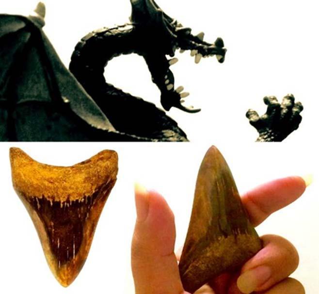 """Las """"lenguas de dragón"""", en realidad dientes de tiburón fosilizados, eran utilizadas antiguamente en la región mediterránea como amuletos, en adivinación y en medicina. (Legendz Collective)"""
