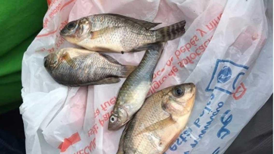 La agencia de Protección Civil para el estado mexicano de Tamaulipas publicaba una fotografía de estos peces, que al parecer cayeron del cielo. (Proteccion Civil Tamaulipas/Facebook)