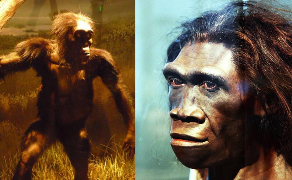 """Izquierda: reconstrucción de """"Lucy""""(Australopithecos) basada en sus restos. Museo de Historia Natural de Washington DC, Estados Unidos. (CC BY SA 3.0) Derecha: Modelo del rostro de una hembra de Homo erectus, uno de los más antiguos ancestros realmente humanos del hombre actual, expuesto en la Sala de los Orígenes del Hombre del Museo Smithsoniano de Historia Natural de Washington DC. (CC BY SA 2.0)"""