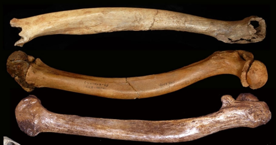 Malformaciones óseas de individuos del Pleistoceno: los fémures deformes de Tianyuan 1, Sunghir 3 y Dolní V stonice 15. (Erik Trinkaus)