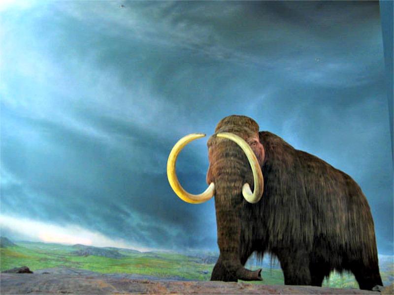 Reconstrucción de Mamut lanudo (Mammuthus primigenius) del Museo Real de la Columbia Británica. (rpongsaj/CC BY-SA 2.0)