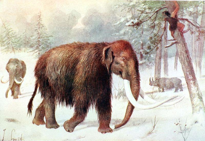 """Tanto en 1920 como en 1981, campesinos rusos informaron de haber observado diversos ejemplares de mamuts lanudos. Ilustración de Joseph Smit para """"El libro del reino animal"""" de William Percival Westell, 1910. (Public Domain)"""