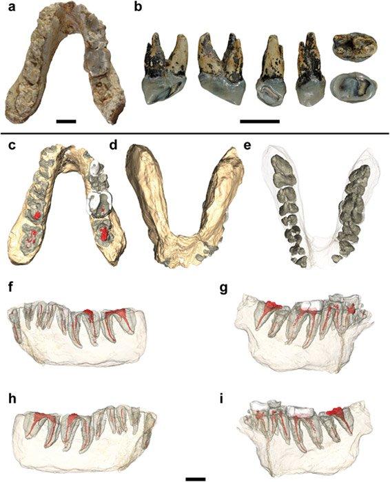 """Fósiles estudiados y reconstrucciones virtuales del holotipo del Graecopithecus (PLOS – """"Potential hominin affinities of Graecopithecus from the Late Miocene of Europe"""" – """"Potenciales afinidades con otros homininos del Graecopiteco del Mioceno tardío europeo"""")"""