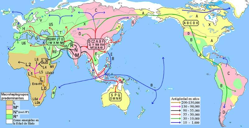 Mapa de las migraciones humanas que tuvieron lugar a lo largo de la prehistoria en función de sus haplogrupos mitocondriales. En color rosa-malva, las zonas de predominio del Haplogrupo M y sus descendientes en poblaciones nativas. (Maulucioni/CC BY – SA 3.0)