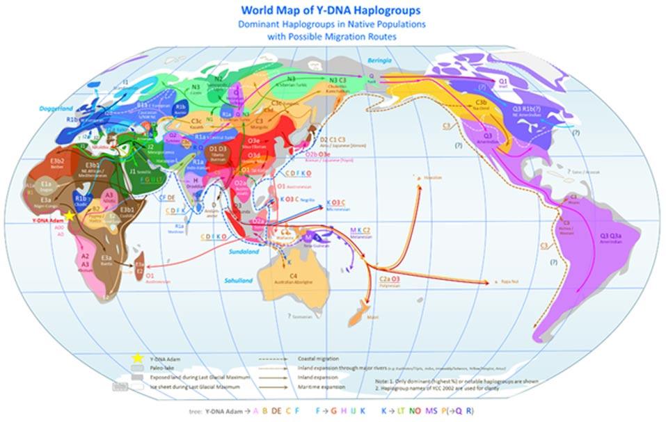 Mapa mundial de los haplogrupos del cromosoma Y: haplogrupos de las poblaciones precoloniales y posibles rutas migratorias. (CC BY SA 3.0)