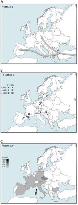 Mapas que explican el escenario propuesto para los linajes K1f y G2a. Mapa A: Migraciones que tuvieron lugar hace unos 8.000 años en las que poblaciones de principios del Neolítico procedentes del Próximo Oriente llegaron a Europa trayendo consigo los haplogrupos principales del ADN mitocondrial K1 y el cromosoma 'Y' G2a, según datos recientes basados en estudios de ADN. Mapa B: Distribución de los haplogrupos del ADN mitocondrial K1 (círculos) y el cromosoma 'Y' G2a (rectángulos), basada en antiguas muestras datadas en hace más de 5.000 años y sus frecuencias absolutas. Mapa C: Distribución y frecuencias aproximadas del haplogrupo G2a-L91 en Europa. (V. Coia, et al.)