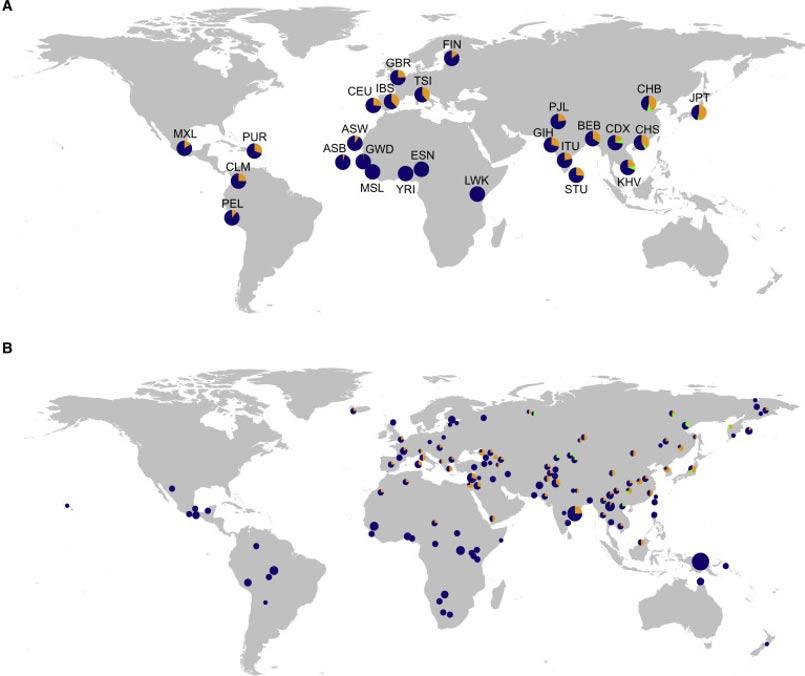 El mapa de más arriba muestra las frecuencias de haplotipos de origen Neandertal. El de más abajo, el predominio de los tres genes asociados a los receptores tipo Toll presentes en los humanos actuales. El tamaño de cada sector circular se corresponde con la proporción de individuos de una misma población. Los haplotipos principales aparecen en diferentes colores (III, naranja; IV, verde; haplotipos no arcaicos V, VI, VIII y IX, azul oscuro). (Dannemann, Andrés, & Kelso)