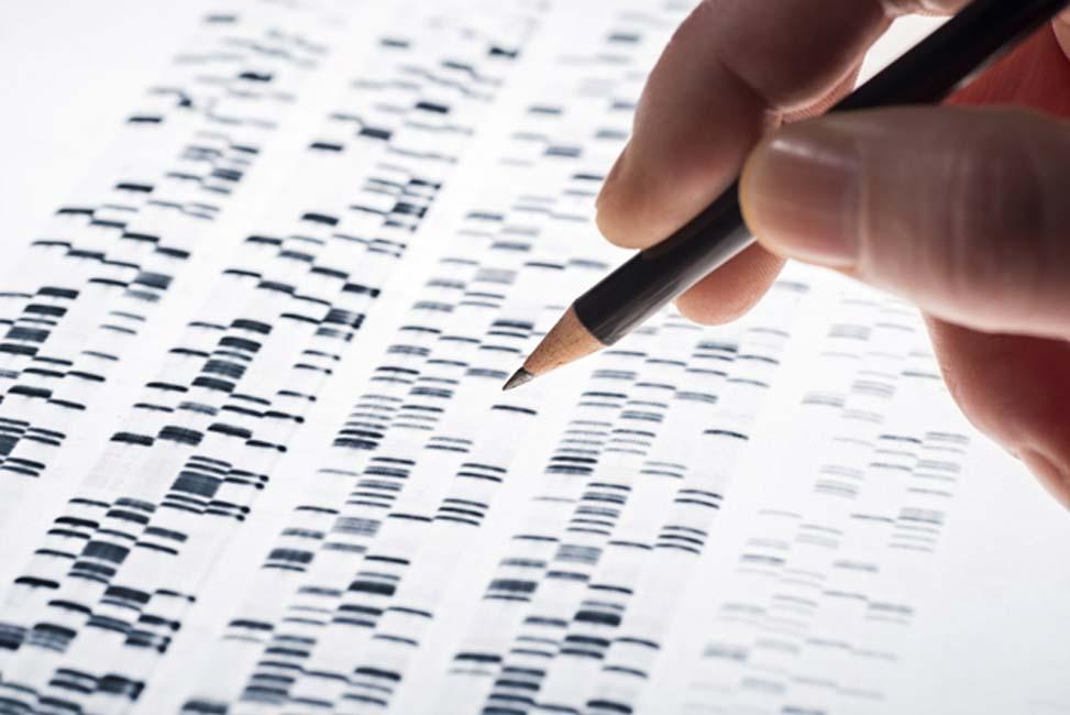 Los genomas constan de cientos de miles de marcadores. (Imagen: Eisenhans/Adobe Stock)