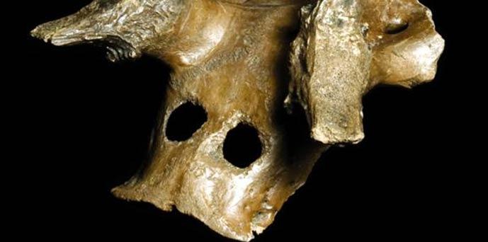 Una de las tres máscaras mesolíticas de cráneos de ciervos de la nueva exposición. (Museo de Arquelogía y Antropología de Cambridge)