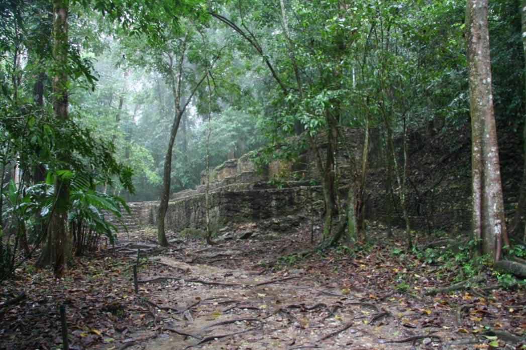 Ruinas mayas en una jungla tropical. (Wikimedia Commons) Un reciente estudio ha analizado el comportamiento de los mayas y su impacto sobre el clima, la vegetación, la hidrología, las rocas y el suelo. El período analizado abarca aproximadamente del 1000 a. C. al 1000 d. C.