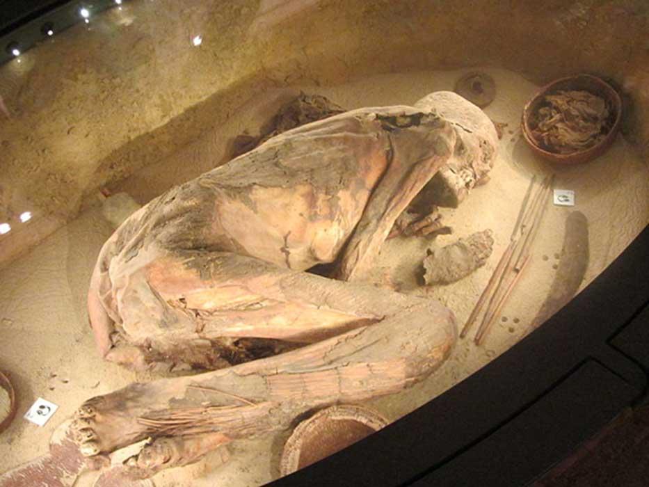 Restos del egipcio más antiguo del mundo, Museo Egipcio de Turín, Italia. (CC BY-SA 3.0)