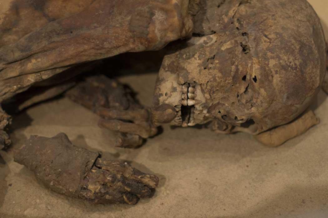 La momia data de la prehistoria egipcia, anterior al período faraónico clásico. (Imagen: ©Fotolia)