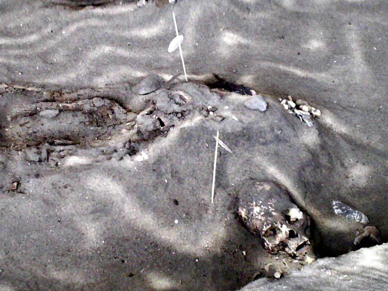 Momias Chinchorro halladas en el yacimiento arqueológico chileno de Arica. (Zorka Ostojic Espinoza/CC BY-SA 2.0)