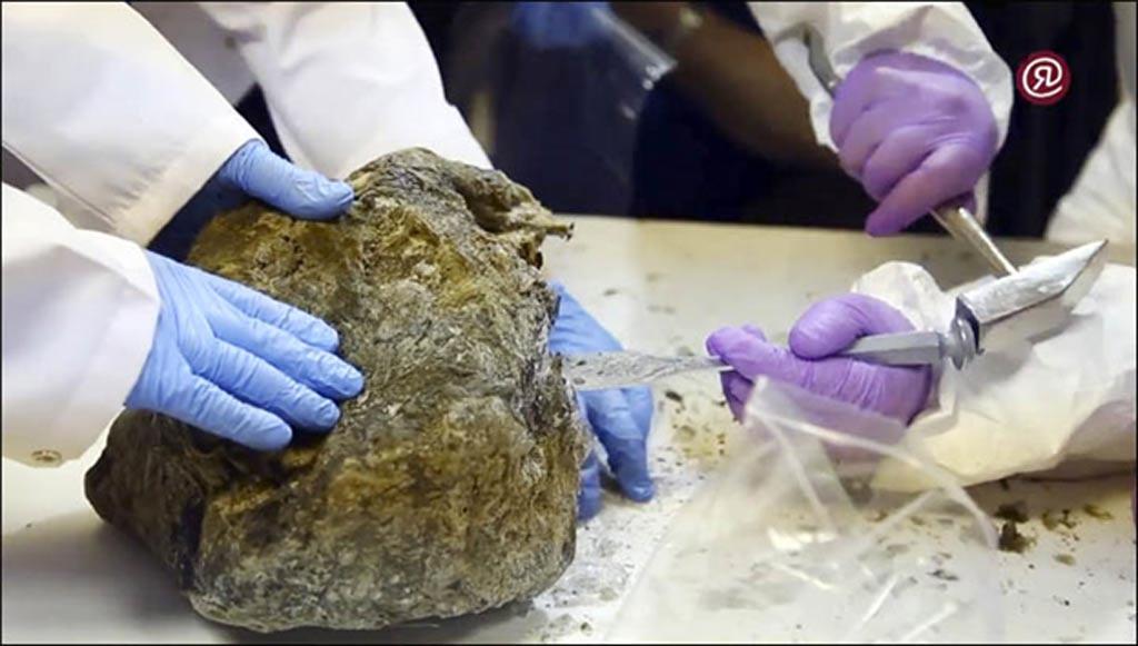 'Los coreanos esperaban obtener más muestras, como hicieron con el mamut en el pasado. Pero eso no va a funcionar con estos gatitos.' Fotografías: Galina Mozolevskaya/YSIA