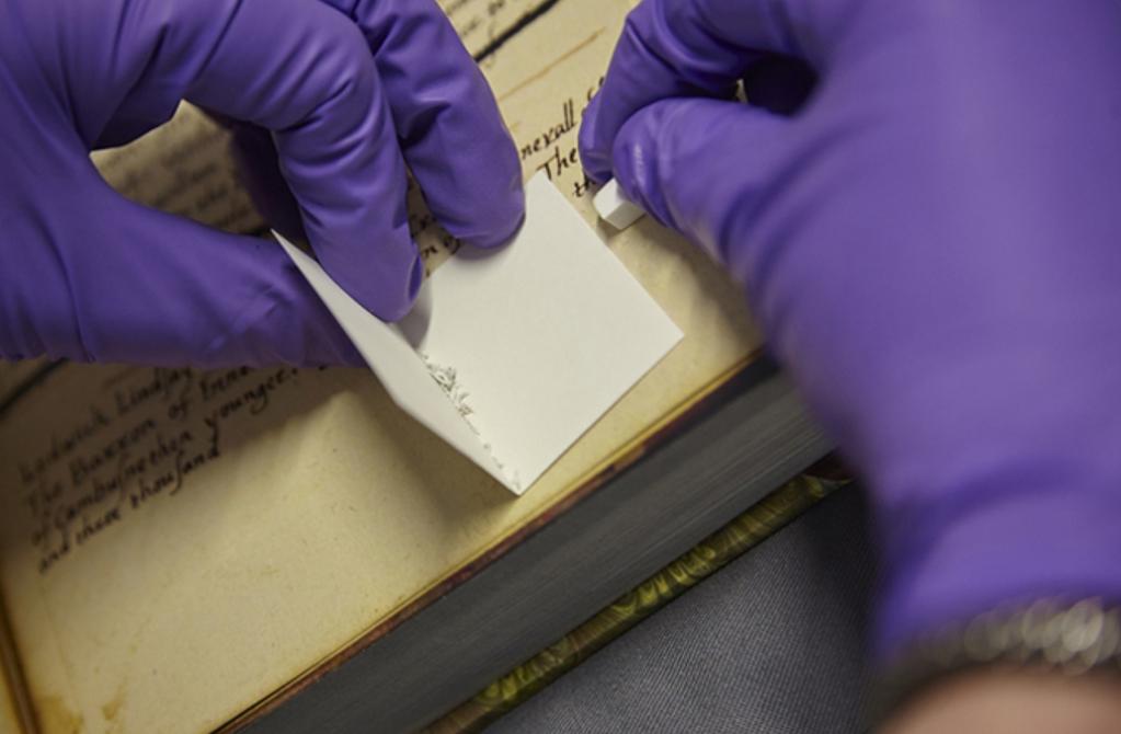 Las proteínas del pergamino se obtienen sencillamente frotando con una goma de borrar la superficie de la membrana. Fotografía: Matthew Collins
