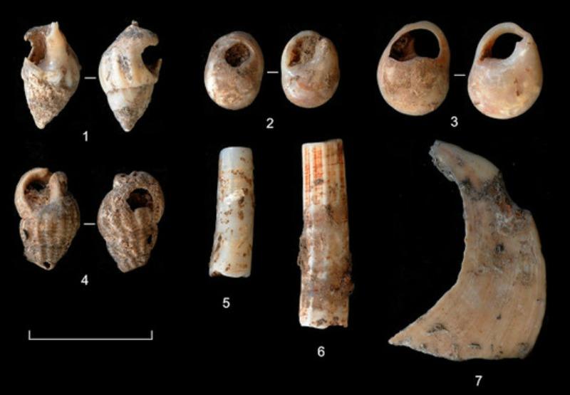 Algunos de los muchos ornamentos hallados en el yacimiento del Molí del Salt. (Fotografía: IPHES/SINC)