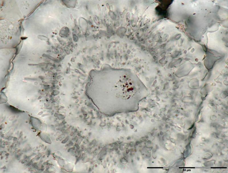 Restos de la posible oxidación de materia orgánica. (Fotografía: El Mundo/M. Dodd)