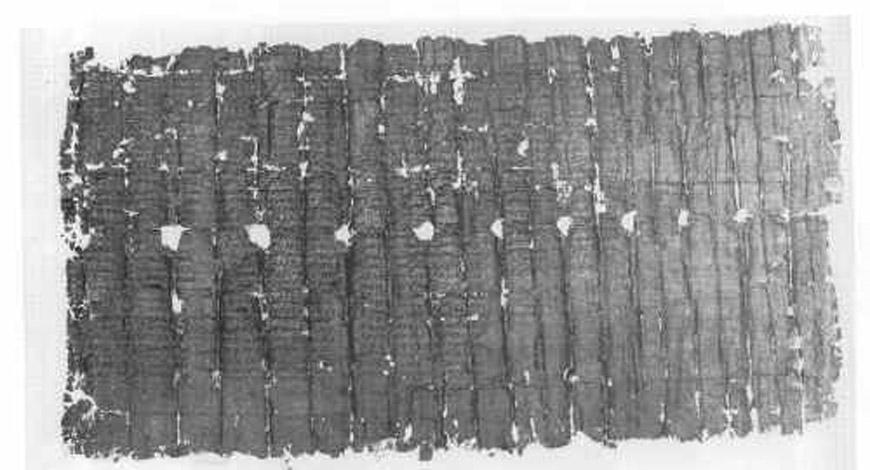 Papiro de Herculano 1428: Filodemo, 'De la piedad'. (The Friends of Herculaneum Society)