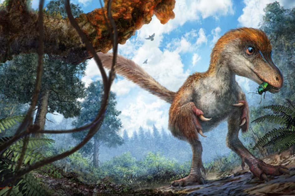 Impresión artística de un pequeño celurosaurio en un paisaje boscoso. (Cheung Chung y Liu Yi)