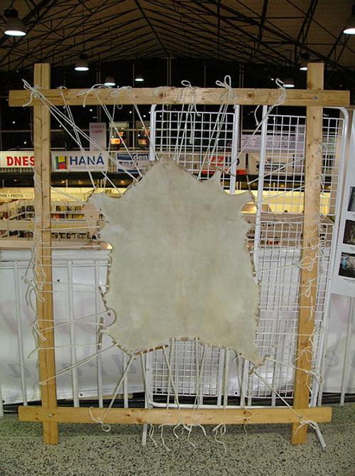 El pergamino o vitela se obtenía a menudo estirando la piel sobre un marco de madera (Public Domain)