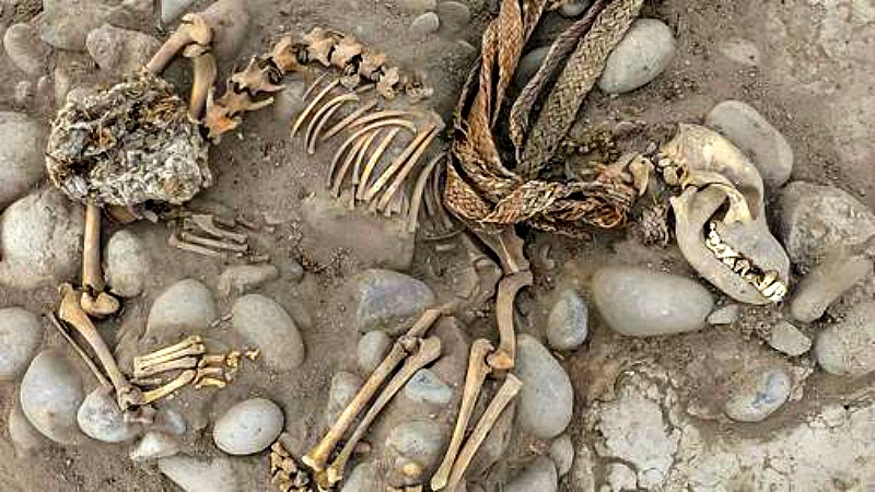 Los arqueólogos creen que los perros podrían haber sido estrangulados. (Fotografía: Rubén Sánchez/ABC)