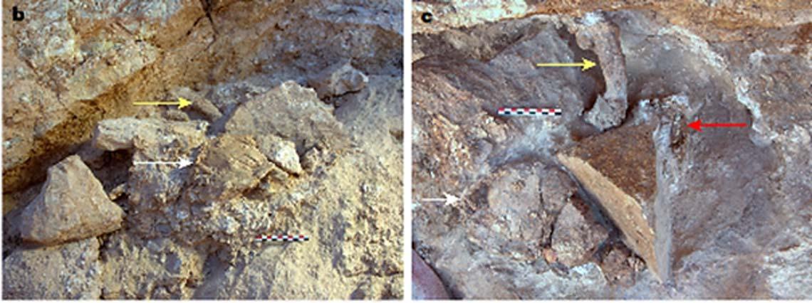 Algunos de los recientes descubrimientos realizados en Jebel Irhoud, Marruecos. Izquierda: cráneo incompleto en el centro en primer plano (flecha blanca) y fémur en segundo plano (flecha amarilla). Derecha, el lugar del hallazgo después de realizar nuevas excavaciones. Aún se observan el cráneo incompleto (flecha blanca) y el fémur (flecha amarilla), además de una arcada dentaria derecha incompleta (flecha roja). (Richter, D. et al)