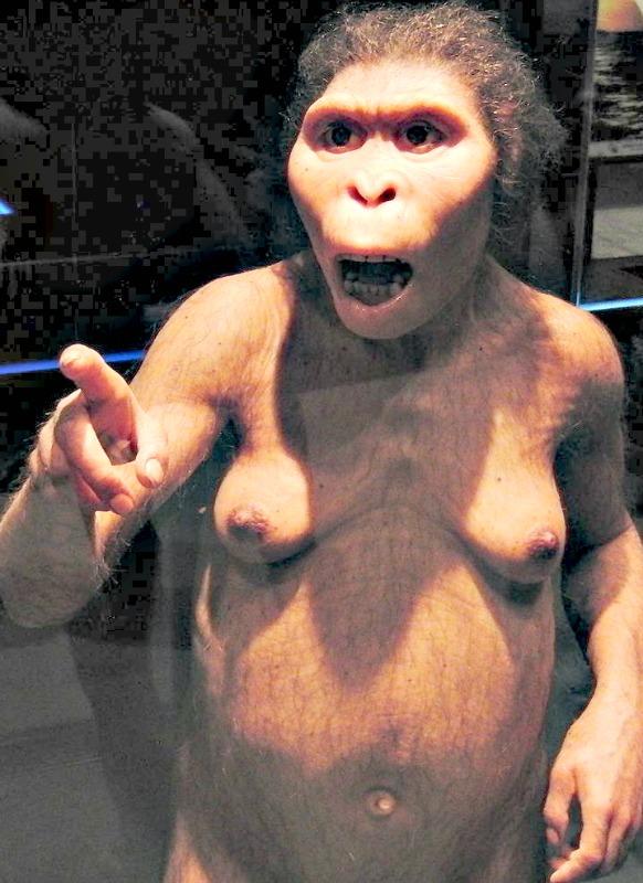 Modelo de Lucy expuesto en el Museo Nacional de Ciencias Naturales de Tokio, Japón. (Momotarou2012/CC BY-SA 3.0)