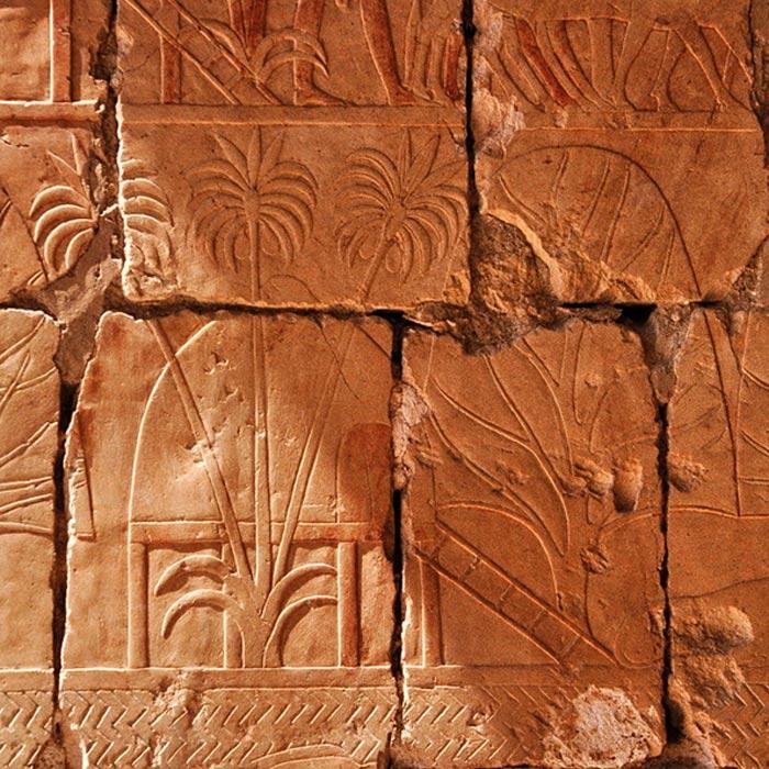 En este relieve podemos observar los árboles de incienso y mirra traídos por Hatshepsut a su regreso de Punt. (CC BY-SA 3.0)
