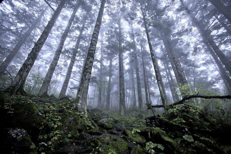 La reserva natural de Shennongjia abarca unos 3.000 kilómetros cuadrados y está ubicada en un remoto rincón de la provincia china de Hubei. Se trata de una zona muy escarpada, con montañas que llegan a superar los 3000 metros de altura y profundos valles. Un lugar donde se ha informado de la mayoría de avistamientos del Yeren (La Gran Época/ Evilbish/Wikimedia Commons)